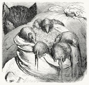 Rat Feed